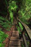 The track down to Montezuma Falls